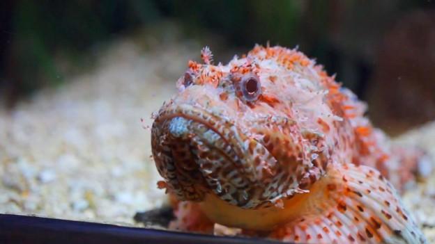 Sea Life Centre Benalmadena