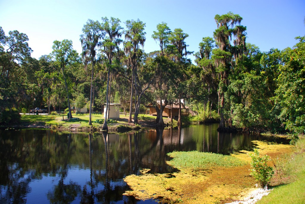 View across the Shingle Creek