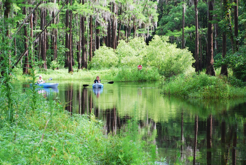 People kayaking in Shingle Creek