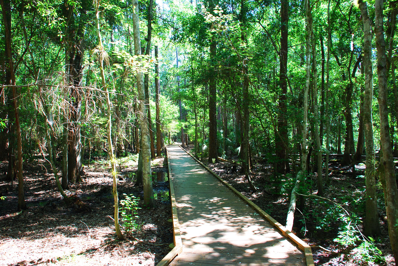 Shingle Creek has many raised walkways taking you over the marsh areas