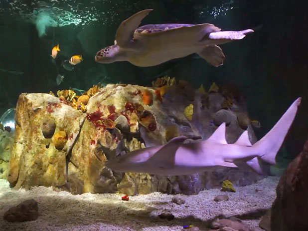 Sea Life Centre in Benalmadena makes a great day out for all the ...