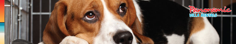 Options for dog care while you are on holiday