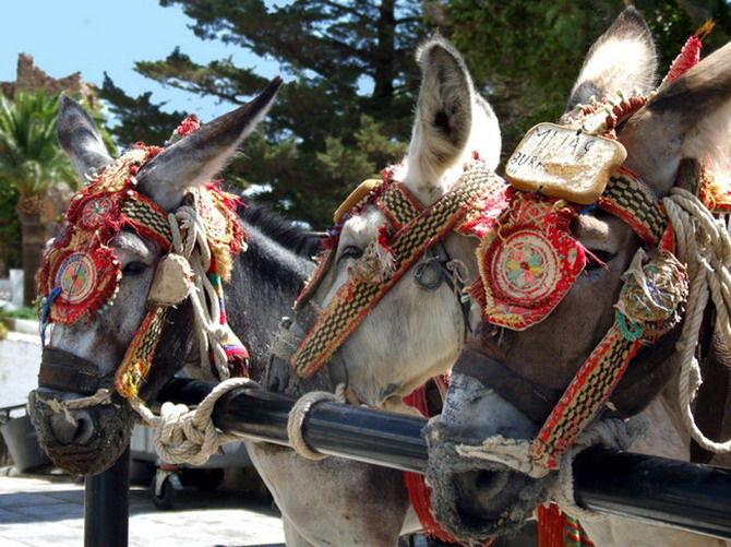 The famous donkey-drawn taxis in Mijas, photo © Anne Sewell
