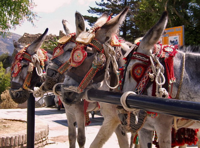The donkey taxis wear colourful livery and have an official number plate