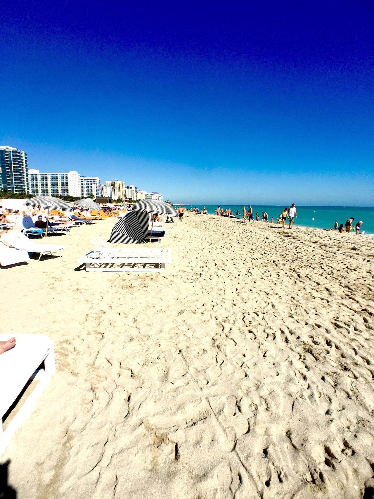 Miami South Beach Local Wildlife: Road Trip From Kissimmee To Miami South Beach