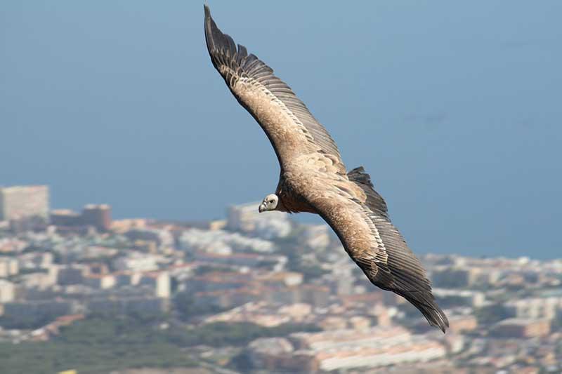 Enjoy the Bird of Prey Exhibition