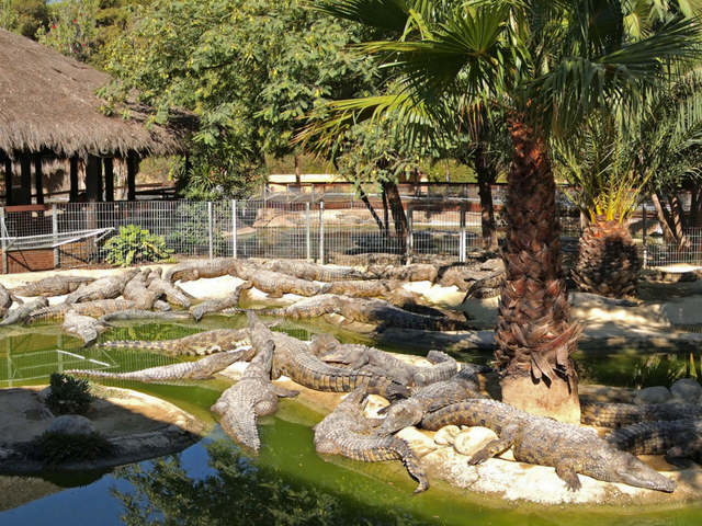 Kids will love the Crocodile Park in Torremolinos