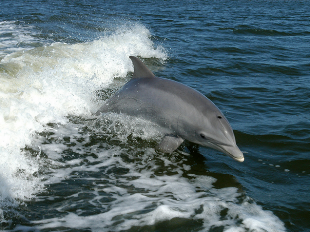 Dolphin watching is a great experience for all the family